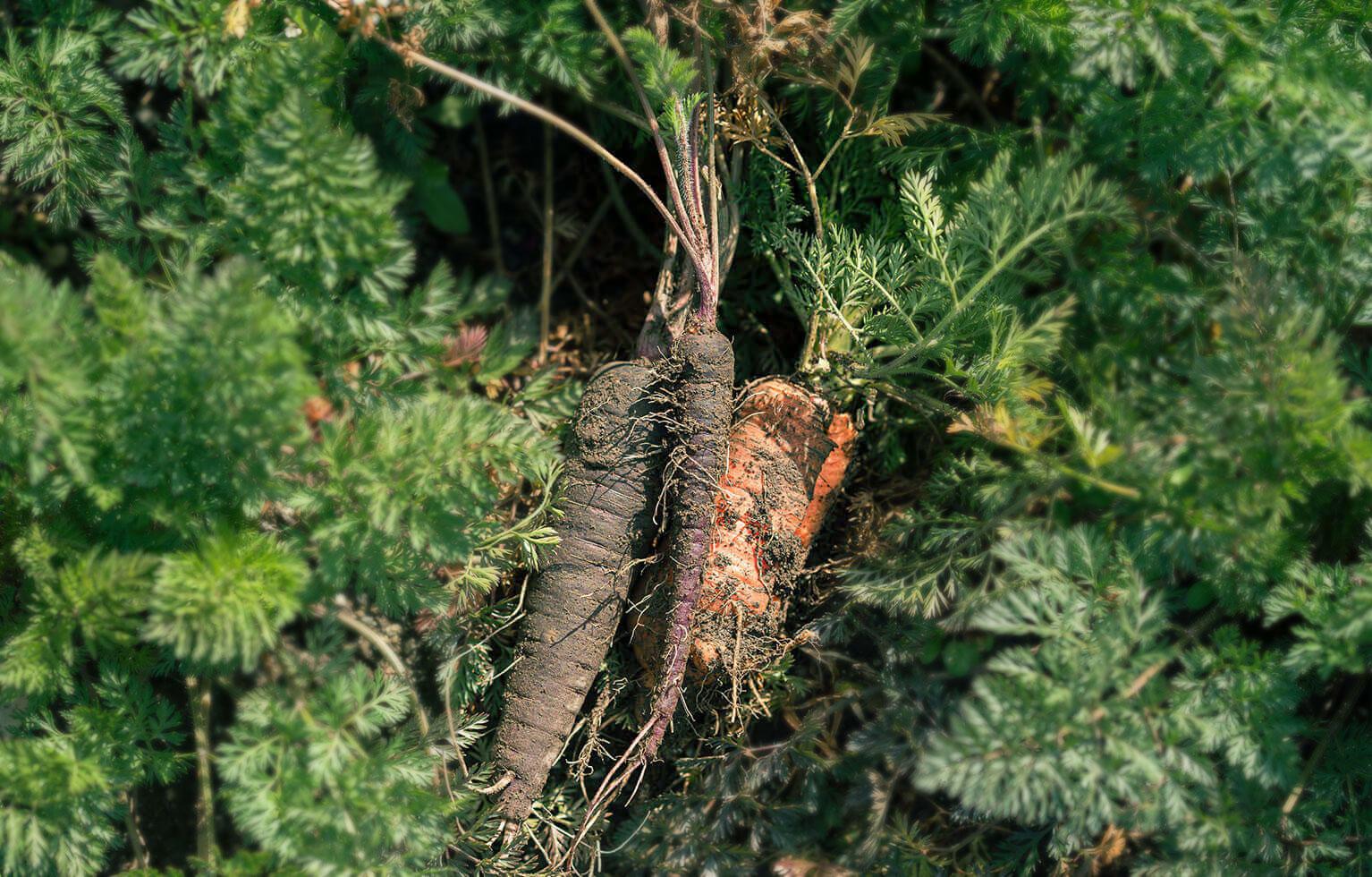 土と野菜 メイン画像
